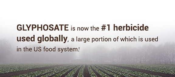 Glyphosate is now the #1 herbicide used globally, a large portion of which is used in the US food system.